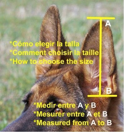Self-adhesive canine earflaps for wolf ears